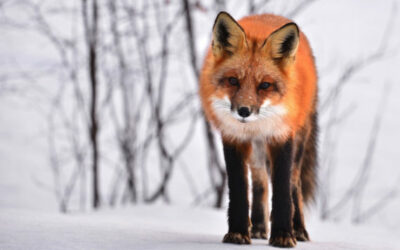 Don't get outfoxed: a quick guide to property valuation
